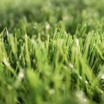 NEW EVOLUTION GRASS BY SPORTLINK