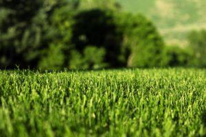 Empresa de grama sintética