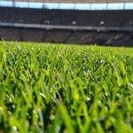 Tudo o que você precisa saber sobre grama sintética